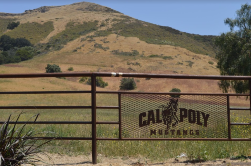 Just off the beaten path, Cal Poly is home to sprawling acres of hills, dirt and animals.